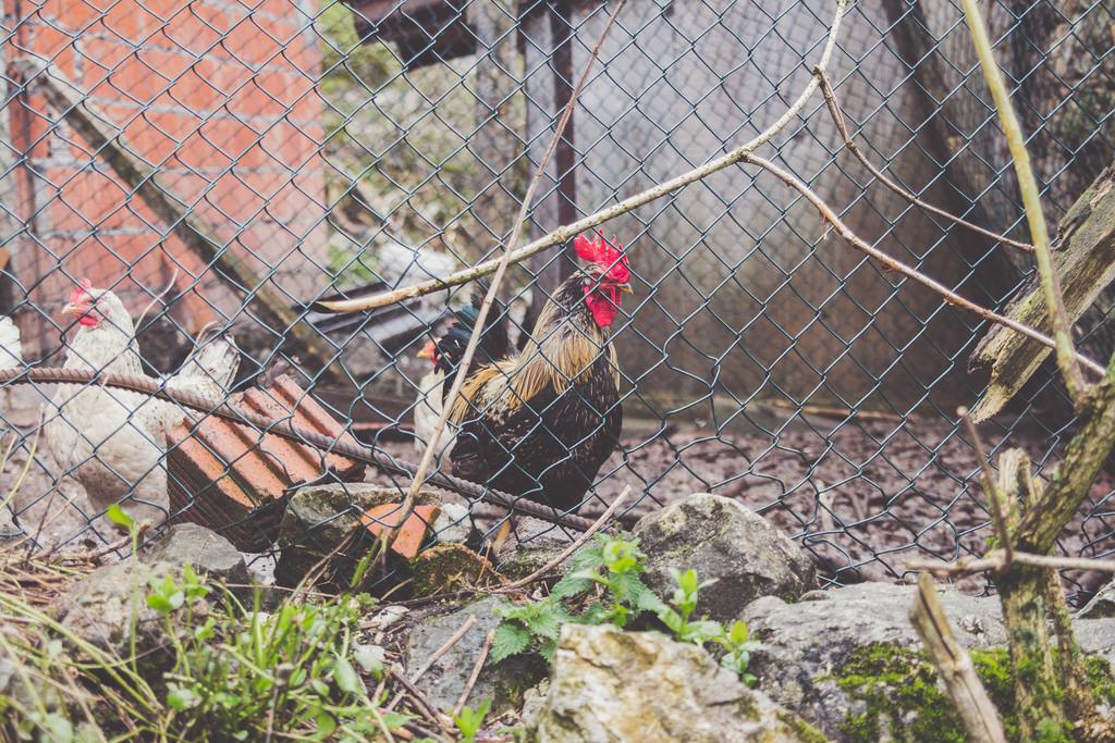 Viaje Asturias silvia Orduna fotografía